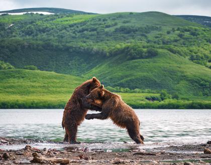 Тур «Медведи, Вулканы и Косатки» 2020