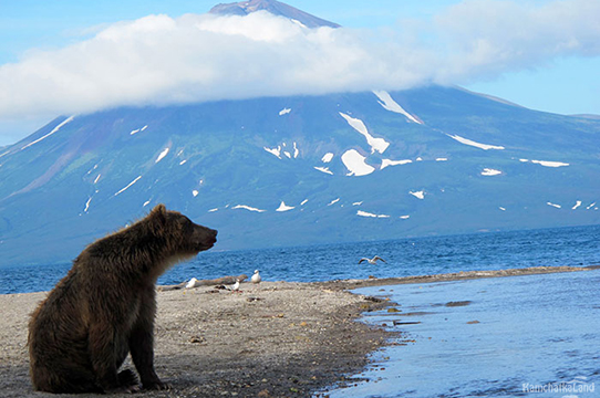 Медведь на берегу Курильского озера